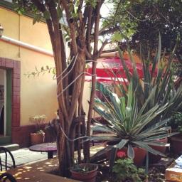 Gaánu and La Cerveceria del Centro's patio