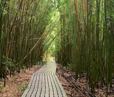 Despite its beauty, this bamboo forest in Maui definitely gave an eerie, you have to be ok with the unknown, kind of vibe.