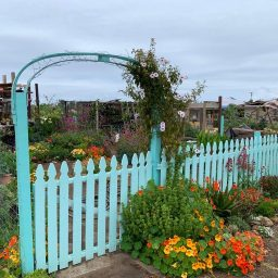 These beautiful garden plots at the Tijuana River Valley Community Garden